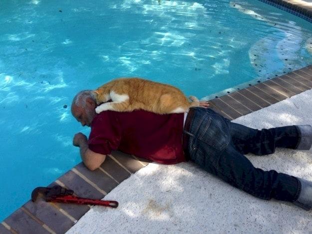 alberca y gato