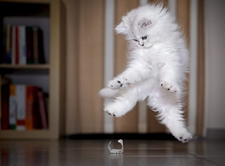 saltos de gato