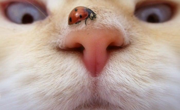 nariz del gato