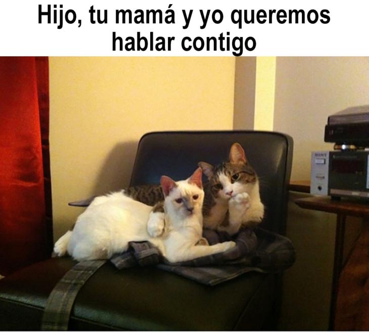 meme de papás gatos