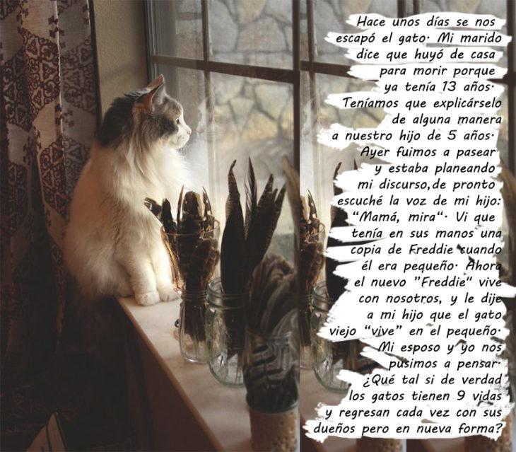 historias destino gatito reencarno