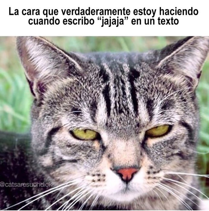 meme de gato serie textear jaja