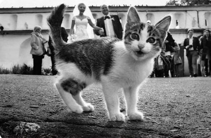 gatito frente a una foto grupal de bodas