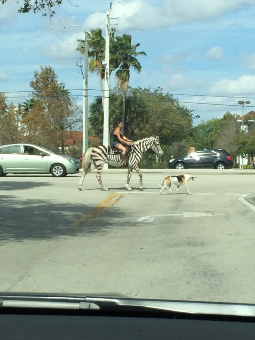 mujer montando una zebra en la ciudad