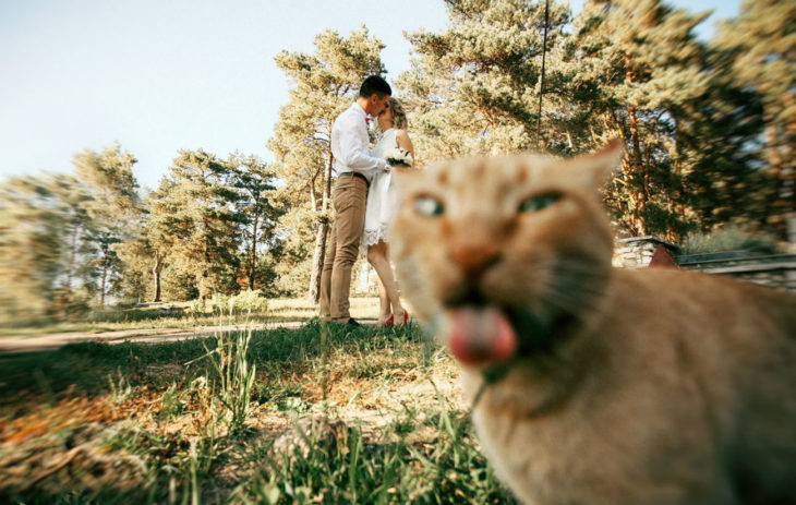 pareja besándose, frente se ve un gato que saca la lengua