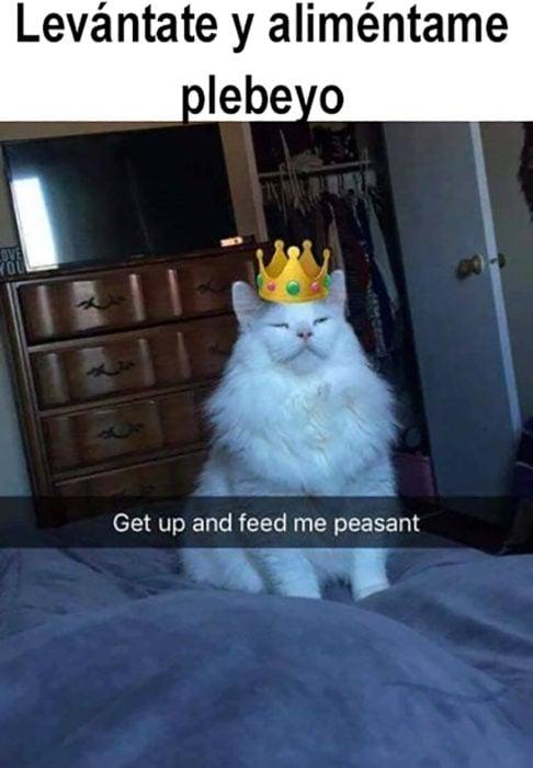 meme gato con corona