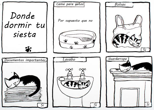 manual para gatos