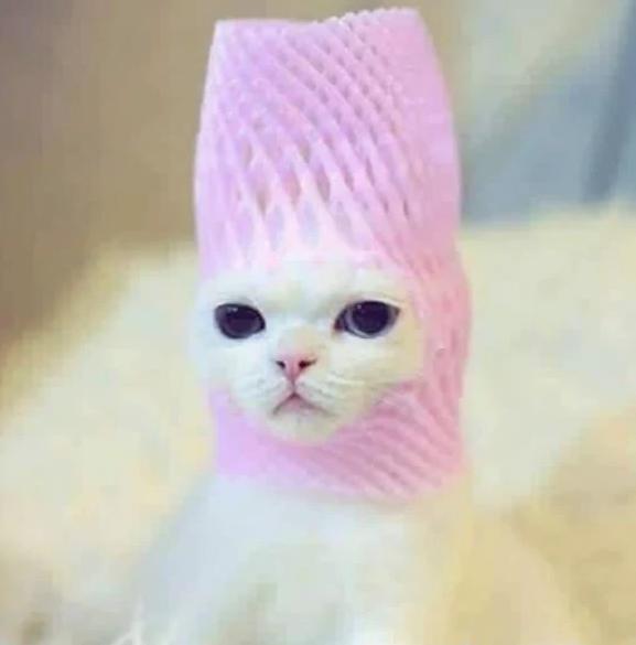 gata con estilo