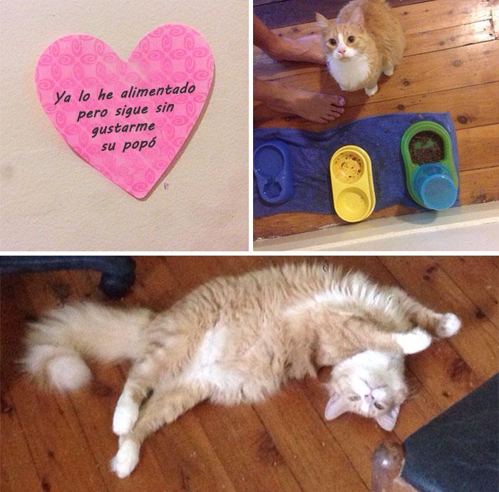msj amorosos fail gatito