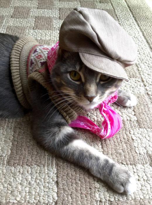 gato con mucho estilo