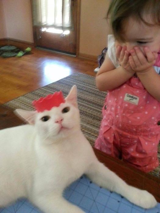 su gatita es una princesa