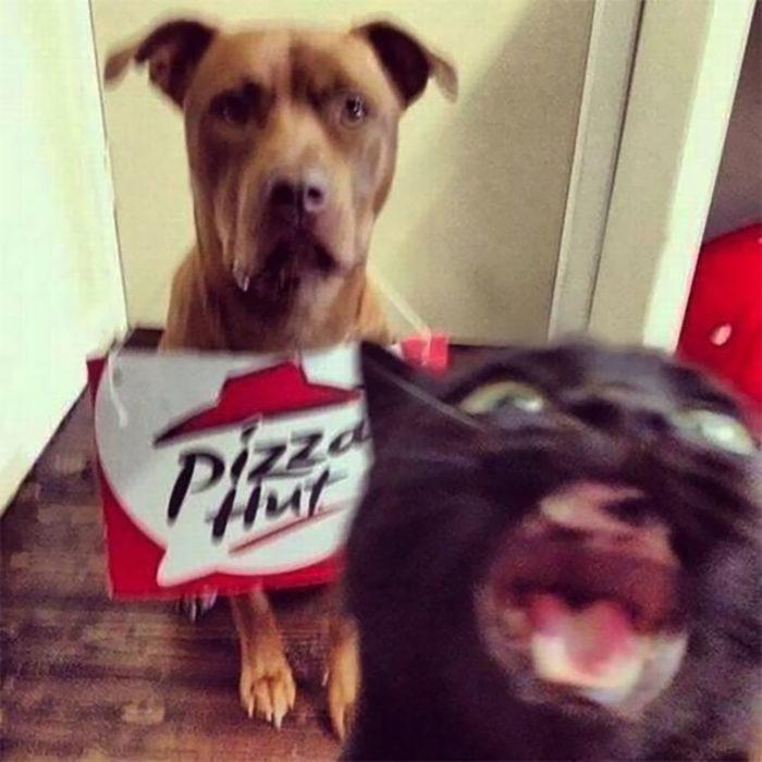 perrito vestido de repartidor y gato con la mandíbula abierta