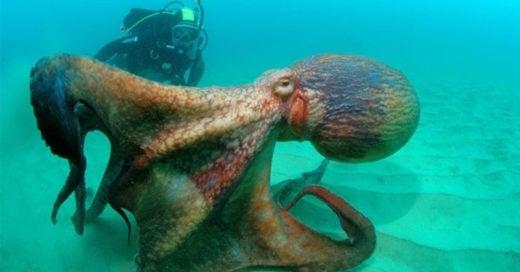 Cover aventuras bajo el mar que te dejaran impactado
