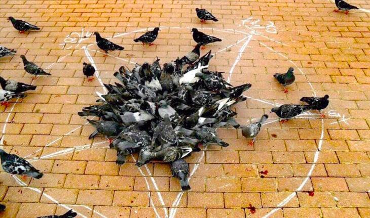 palomas amontonadas en una estrella dibujada en el piso