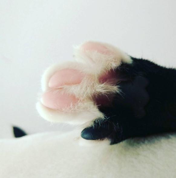 matas blancas dedos rosa gato negro