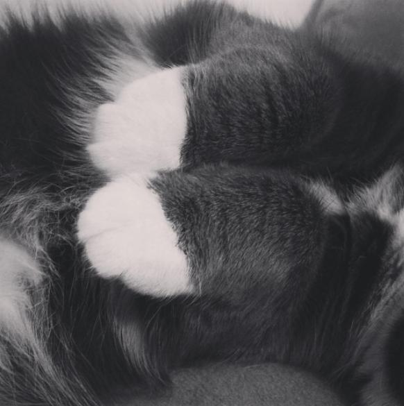 blanco y negro patas de gato