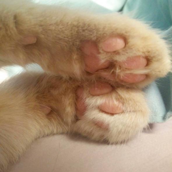 patitas de gato amarillo