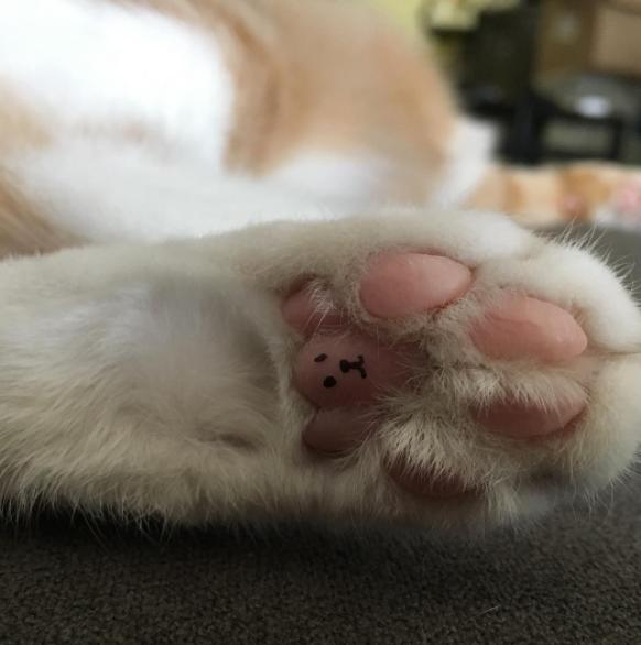 patitas de gatos rosadas