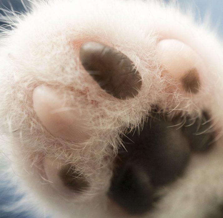 huellas pata de gato