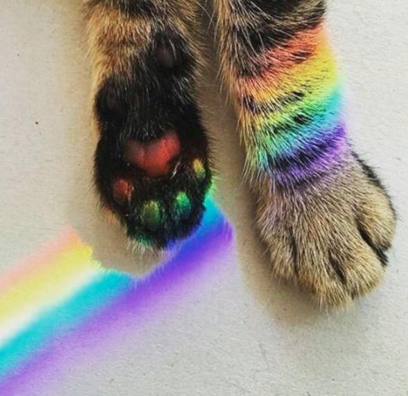 gato patas arcoiris