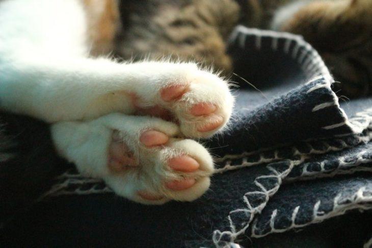patitas gato dormido