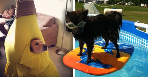 Cover dueños que se arrepintieron de dejar encargadas a sus mascotas