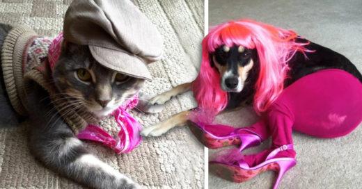 Cover Niños les hicieron un cambio de look a sus mascotas
