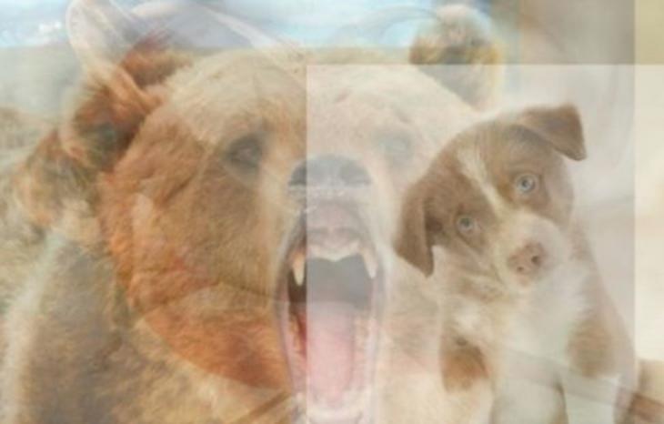 dibujo perro oso