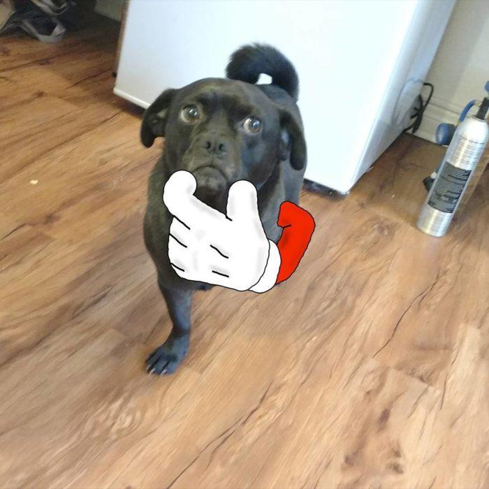 perro patitas 5