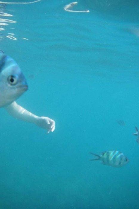 ilusión óptica aprece que pez tiene un brazo