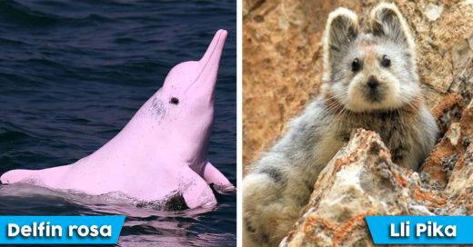 Cover Fantásticos animales que no conocías