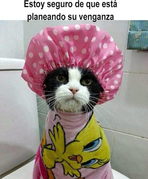 gato en ropa de baño