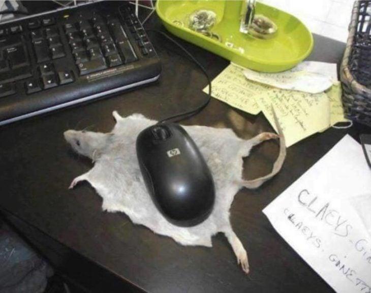 ratón de coputador sobre piel de ratón real
