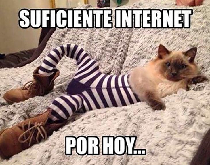 meme gato con medias