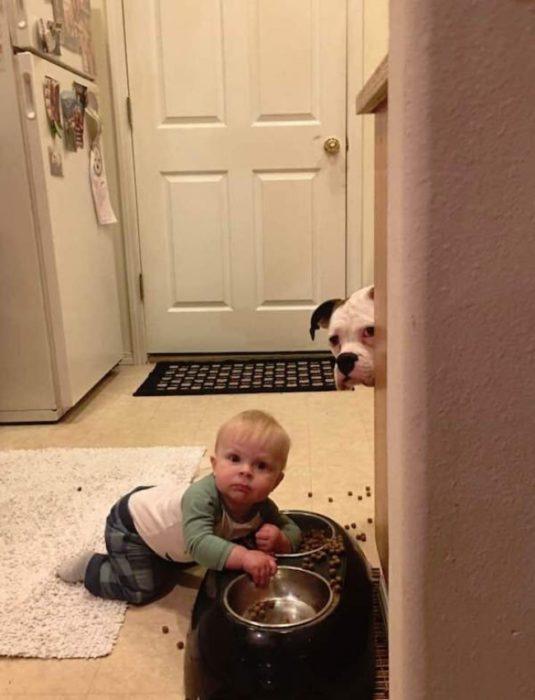 bebé comiéndose la comida del perro