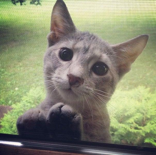 Gato con ojos tiernos queriendo que le abran la puerta
