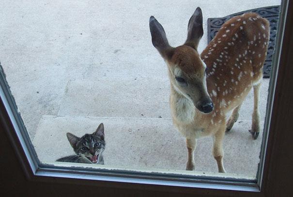 Venado y gato esperando que les abran la puerta