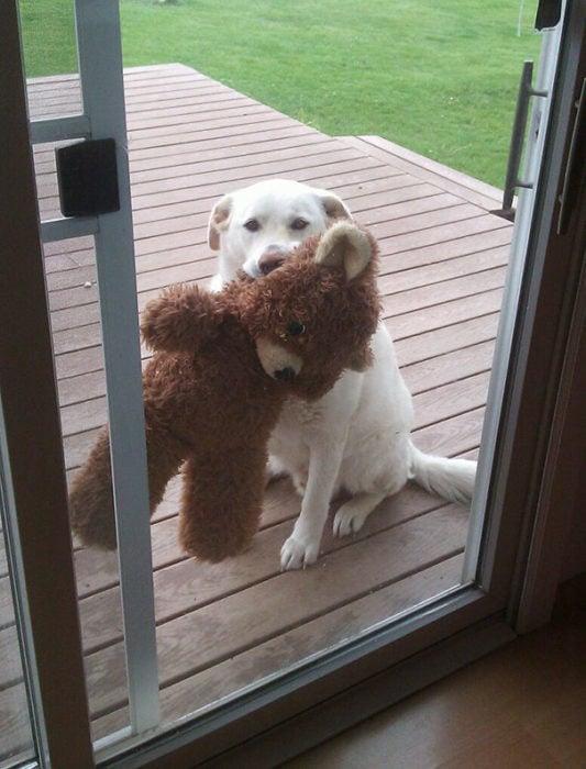 Perro con su oso esperando entrar a la casa