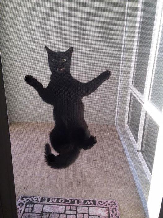 Gato negro sonriendo en la puerta