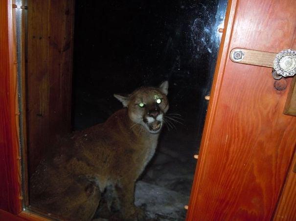 Leopardo en la puerta