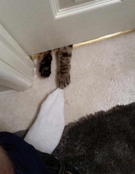 Patas de gato por debajo de la puerta