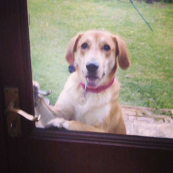 perro esperando quee le abran la puerta
