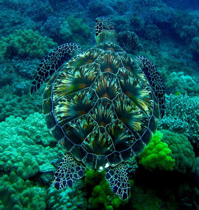 tortuga marina camuflaje