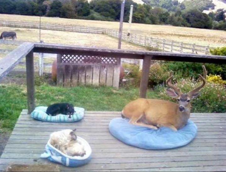 reno en cama de perro