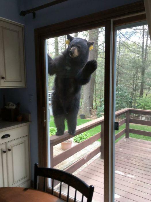 oso en la puerta