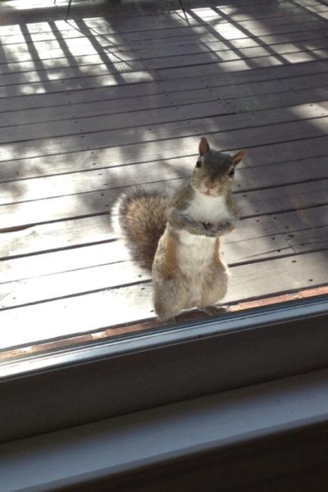 ardilla en la ventana