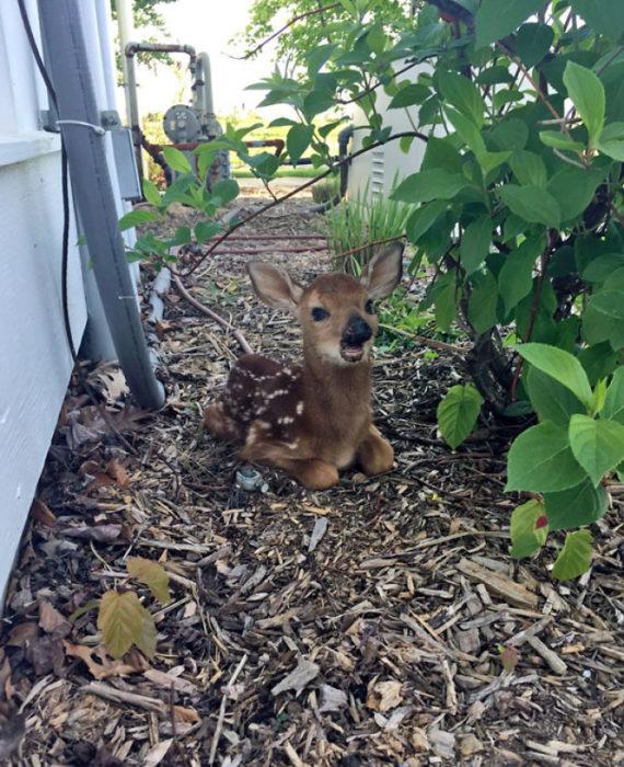 ciervo en el patio