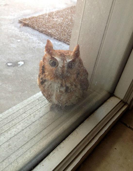 buho en la ventana