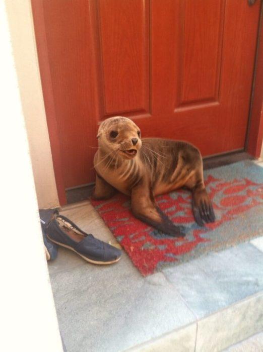 foca en la puerta