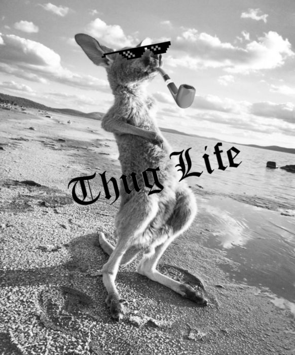 Batalla Photoshop canguro - thug life